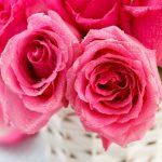 Todo lo que necesitas saber sobre el agua de rosas